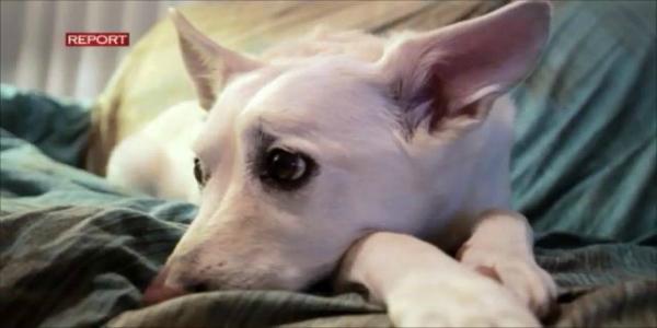 Report Il Cibo Per Cani E Gatti Fa Male Inchiesta Shock Del