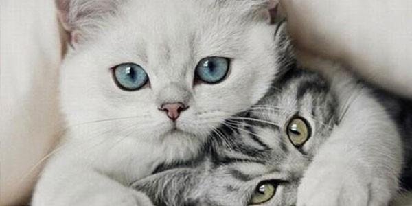 16 anni prigione gatti uccisi, condanna gatti uccisi, gatti uccisi california, gatti uccisi Usa, serial killer gatti, Usa