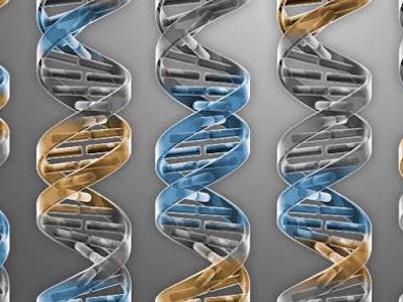 batterio dna ridotto, Craig Venter, creata forma di vita sintetica, forma di vita sintetica, Syn 3.0, Vita sintetica