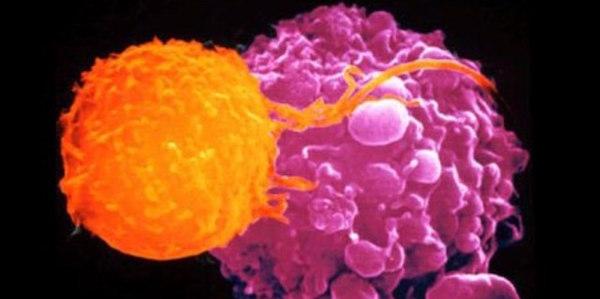 cancro, cura cancro, cure cancro, cure omeopatiche tumore, morti cancro Torino, Ryke Geerd Hamer, terapie alternative cancro, Torino