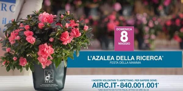 Airc vende 8 maggio azalea si24 for Azalea della ricerca 2017