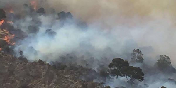 Incendi in Sicilia, cenere e devastazione a Cefalù e sui Nebrodi
