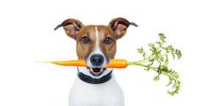 animali-cosa-dare-da-mangiare-a-cani-e-gatti-caldo-estate