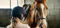 i-cavalli-parlano-con-l-uomo-per-farlo-usano-i-simboli