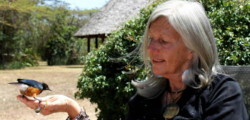 animalista ferita, animalista Kenya ferita, animalista wwf ferita, ferita Kuki Gallmann, Kuki Gallmann, Kuki Gallmann ferita
