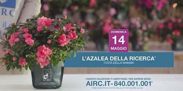 Domenica 14 maggio l'Azalea della Ricerca di AIRC
