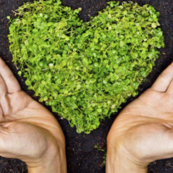 Si celebra la Giornata mondiale dell'ambiente | Via lo smartphone per riconnettersi con la natura
