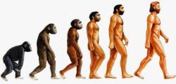 sarwin-e-la-teoria-dell-evoluzionismo-non-si-studiera-piu-nelle-scuole-turche