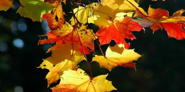 Arriva l'autunno, temperature e meteo stabile | Nel fine settimana qualche nuvola in più al Sud