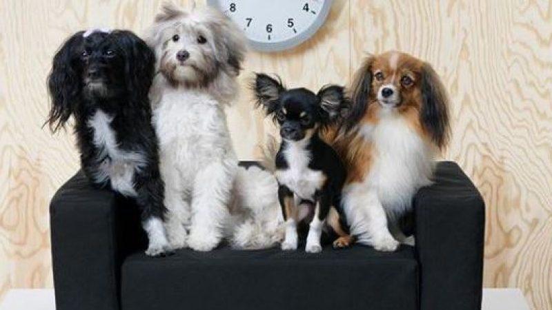"""""""Lurvig"""", la collezione Ikea per cani e gatti"""