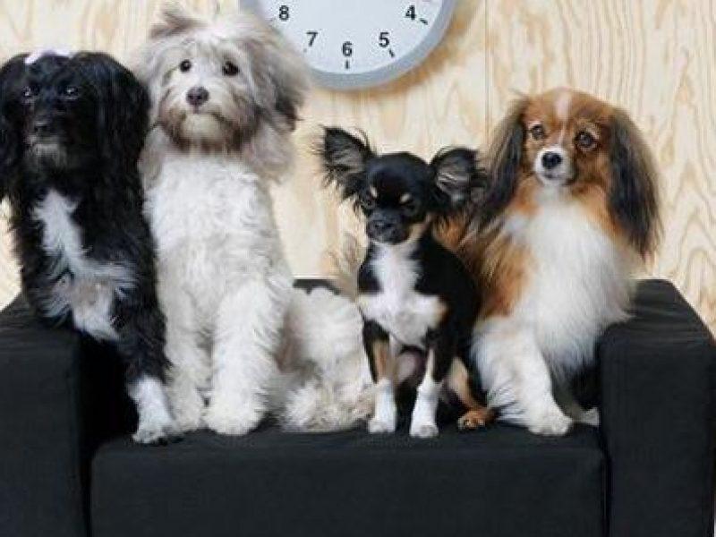 Mobili Per Bambole Ikea : Lurvig la collezione ikea per cani e gatti si24