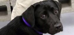 Lulu-cane-licenziato-dalla-CIA