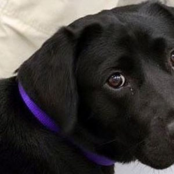 Lulu, il cane