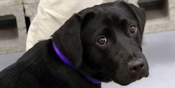 Lulu Il Cane Pacifista Licenziato Dalla Cia Si24