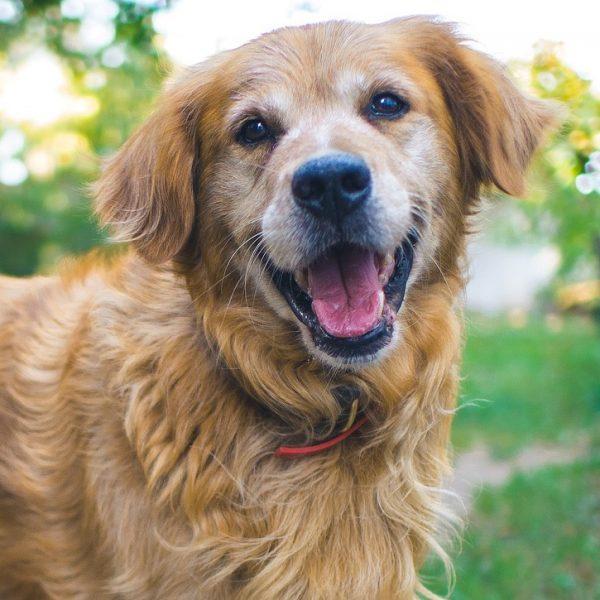Cani: anche loro comunicano con le espressioni facciali
