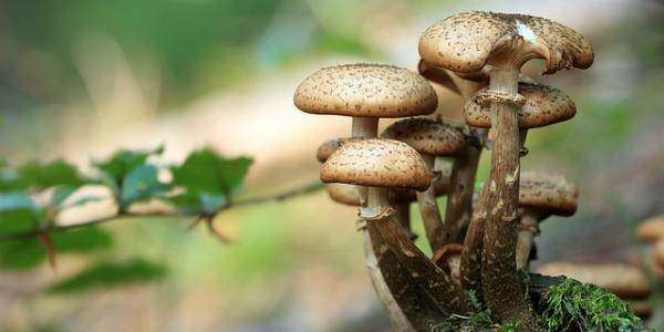 'Si24 consiglia', un weekend a Castelbuono tra funghi e manna: cosa fare e dove mangiare