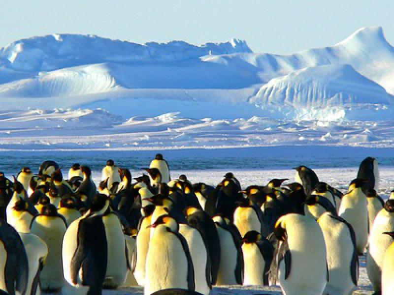 strage pinguini adelia