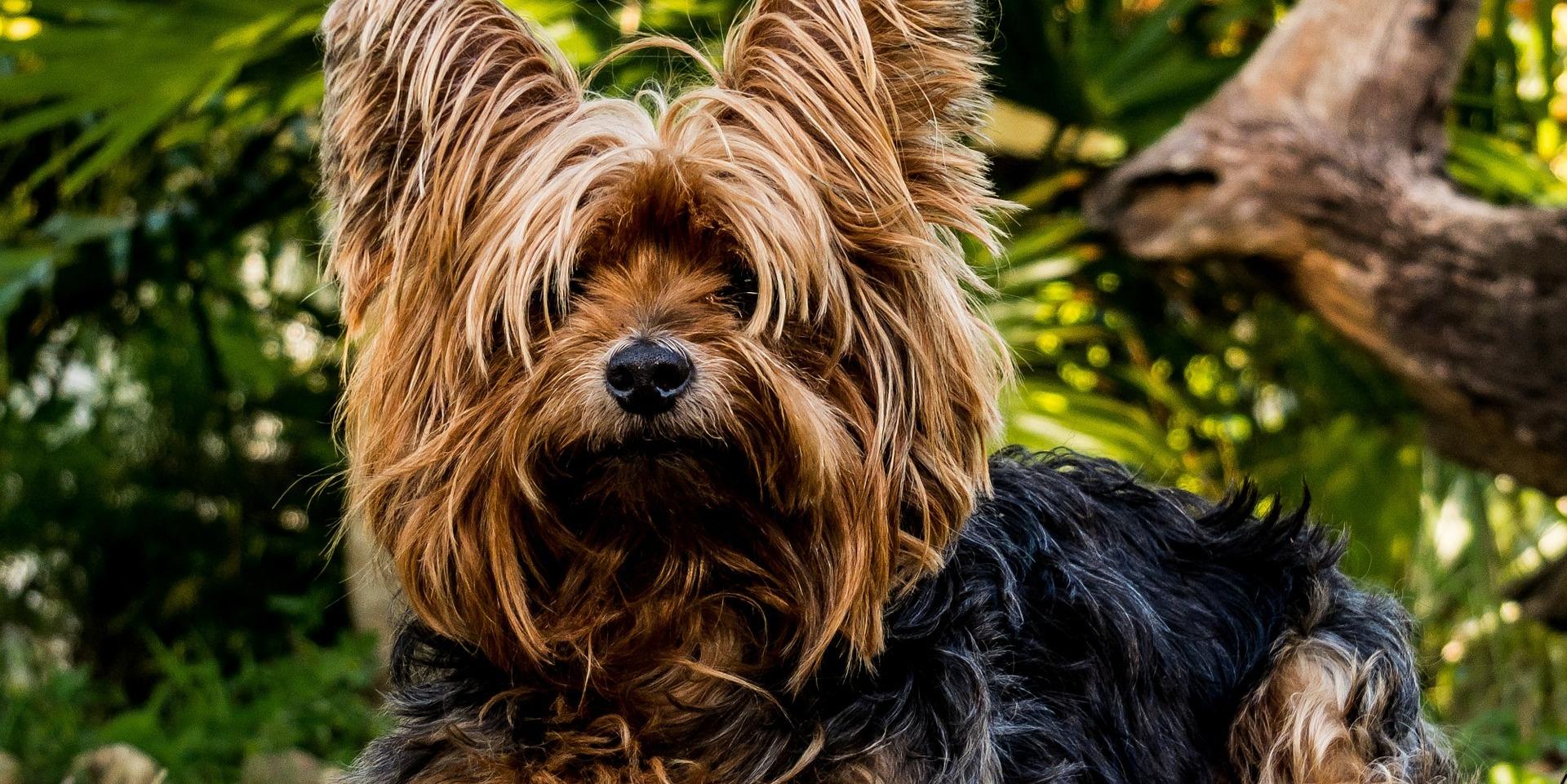 """La """"sindrome del cuore spezzato"""" si manifesta anche in seguito alla morte del cane"""
