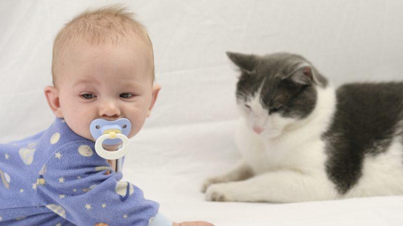Gatti, aiutano i neonati a non ammalarsi