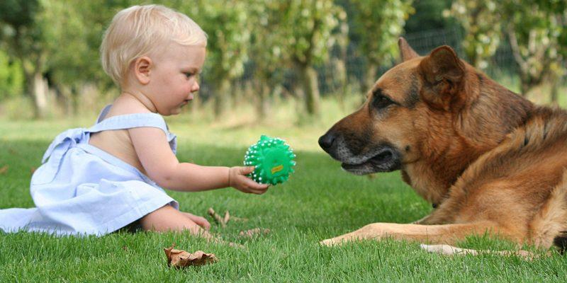 Bambini e animali: benefici e regole da seguire