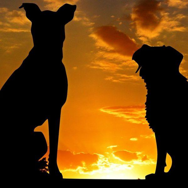 Tomba di famiglia anche per cani e gatti, la proposta di AIDAA a Gentiloni