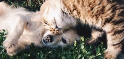 cani-e-gatti-come-proteggerli-dal-freddo