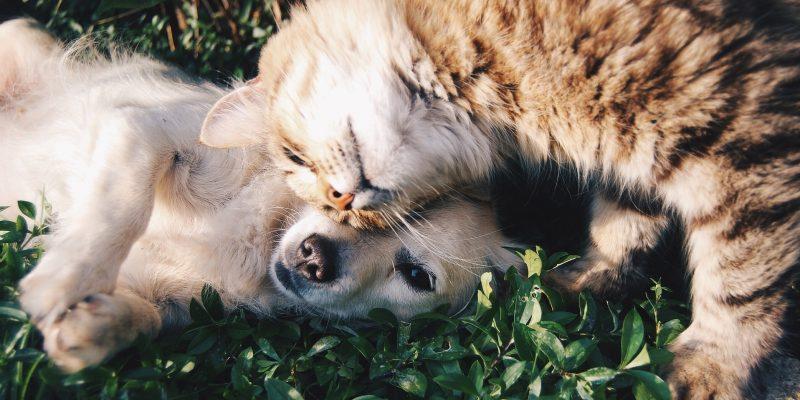 Cani e gatti, come proteggerli dal freddo invernale
