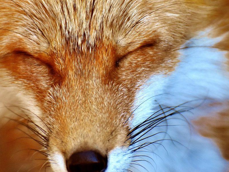 Animali secondo il parlamento britannico non provano for Votazioni parlamento