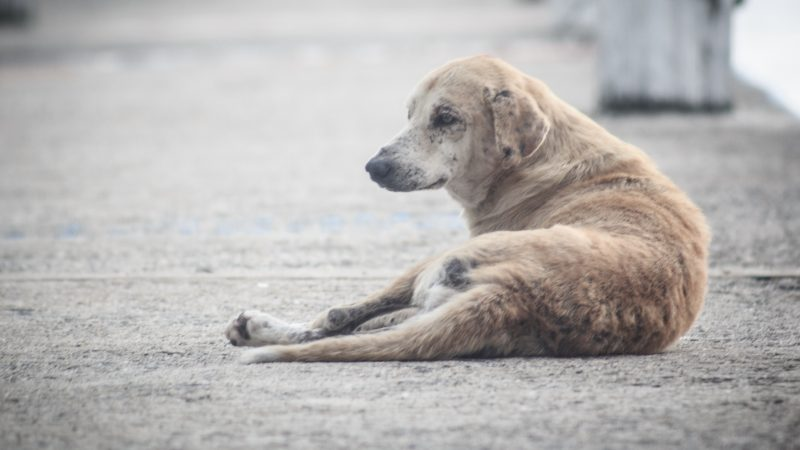 Palermo, veterinario inneggia all'eutanasia |Ora è presidente dell'Ordine: polemica sui social
