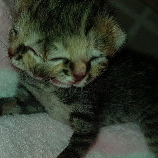 Lotta per la vita Bettie Bee, il gattino con due facce – VIDEO