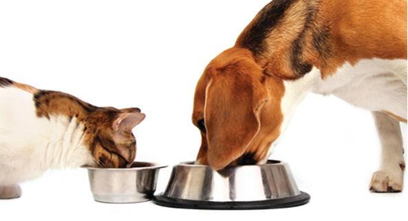 A tavola con Fido e Micio: cosa non mettere nella ciotola?