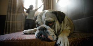 Fumo passivo: i cani e i gatti dei fumatori vivono di meno