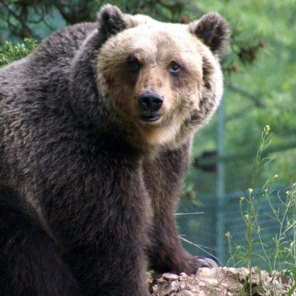 Animali a rischio e nuove specie scoperte, il bilancio del WWF