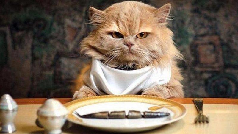 Pet food, adesso cani e gatti mangiano vegetariano