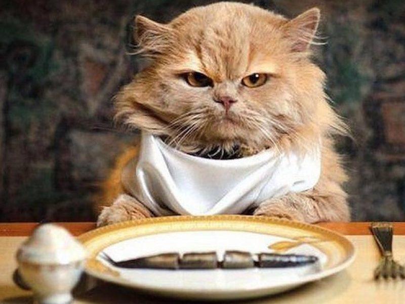 cibi vegetariani per cani e gatti