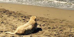 Antonella Clerici dice addio al suo cane: Sei stato il mio primo figlio