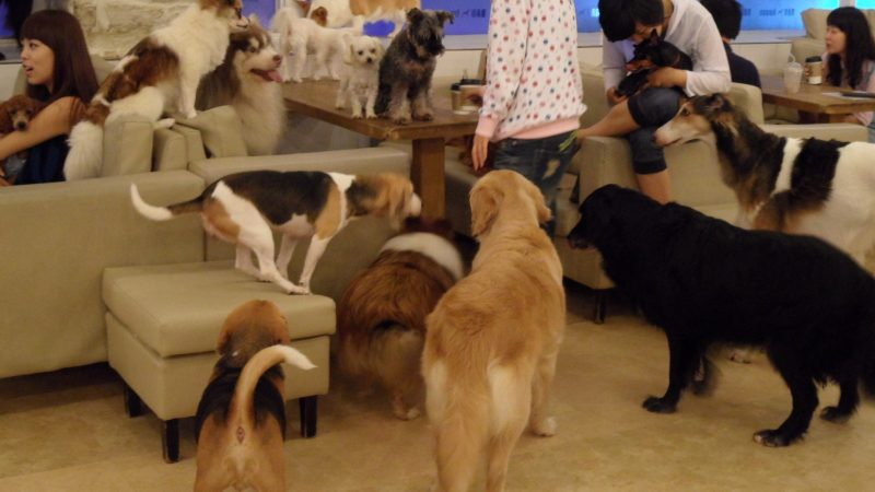 Aperi-bau, ecco dove aprirà il primo pub dog-friendly