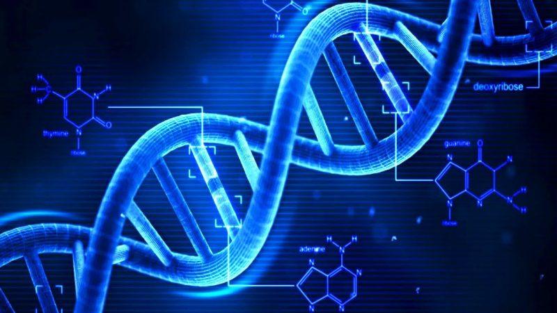Il livello di istruzione è scritto nel…DNA