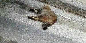 Strage di animali nel Napoletano. Il WWF chiede interventi