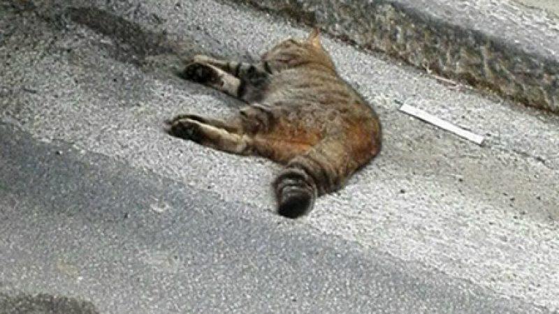Lecco, indagata la serial killer dei gatti