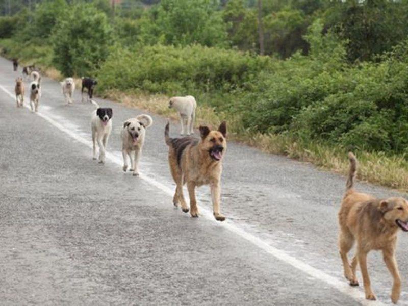 cani di sciacca