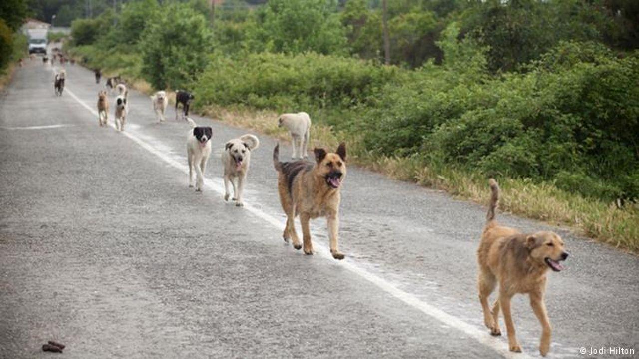 Cani di Sciacca, convocato Comitato per la Sicurezza