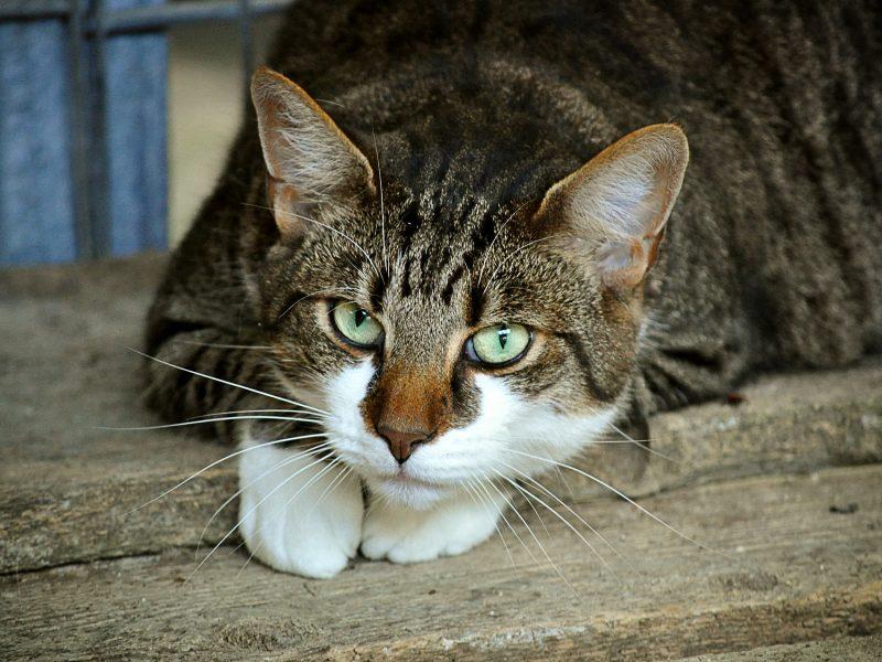 condanna trapani per aver bastonato un gatto