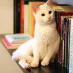 Salute, in arrivo i gatti che non provocano allergia