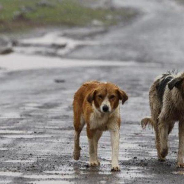 Cani di Sciacca, Enpa sterilizzerà i cani di proprietà