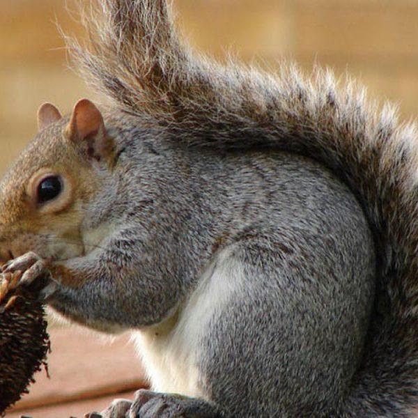Animali: da San Valentino controlli sulle specie
