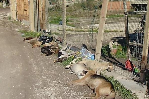 Cani di Sciacca, scoperta la causa dell'avvelenamento