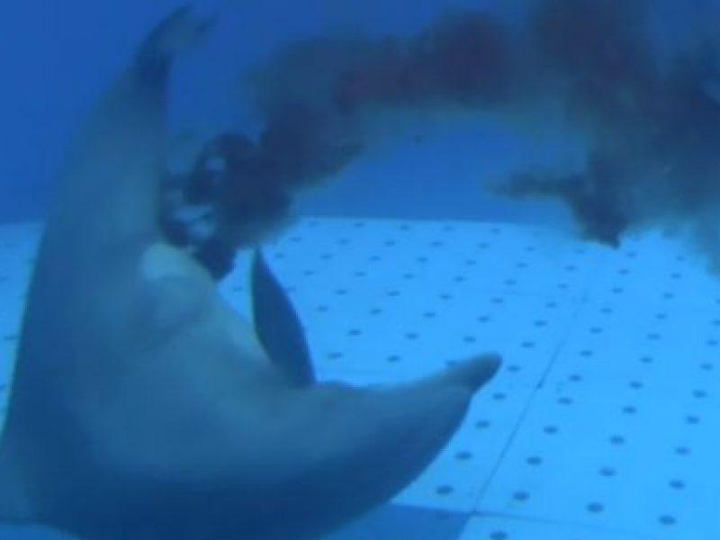 delfino parto