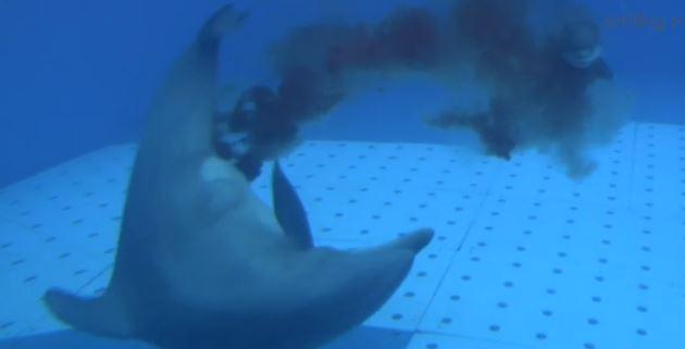 A Zoomarine è nato un cucciolo di delfino: il video del parto