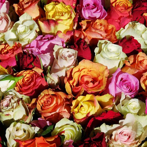 Slow Flowers, è boom di fiori bio in cucina